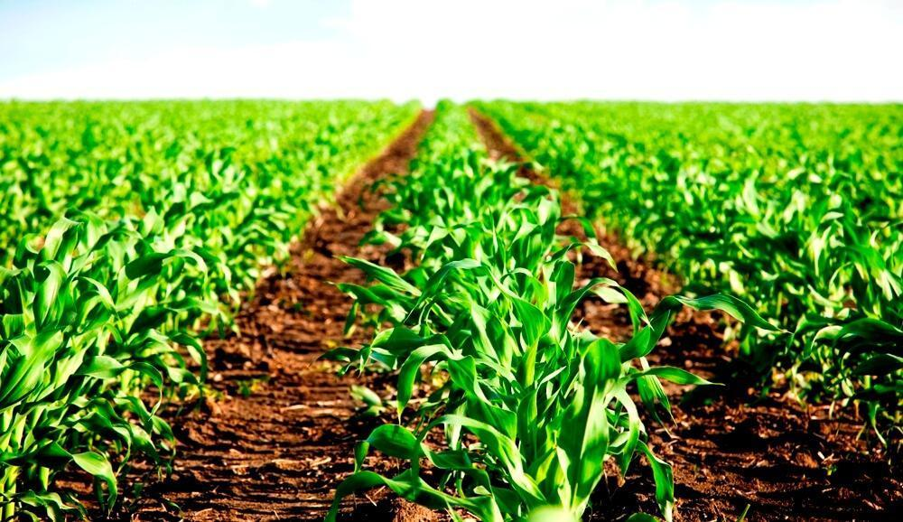 thesis on agricultural credit Impact of access to credit on agricultural productivity: evidence from smallholder cassava farmers in nigeria ba awotide1, t abdoulaye2, a.