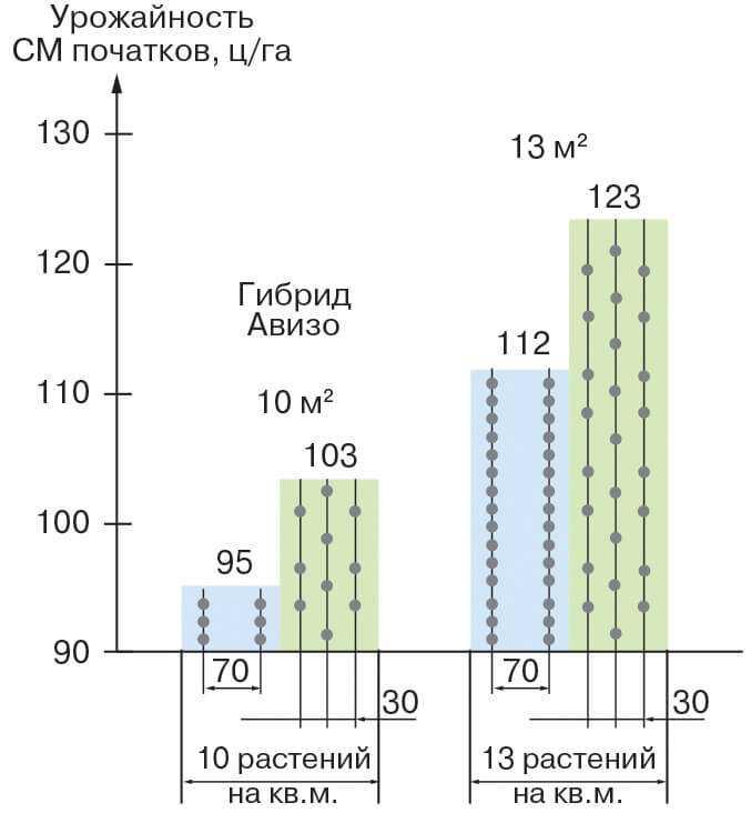 Влияние на урожайность (СМ початков) кукурузы при изменении междурядья и густоты стояния фото