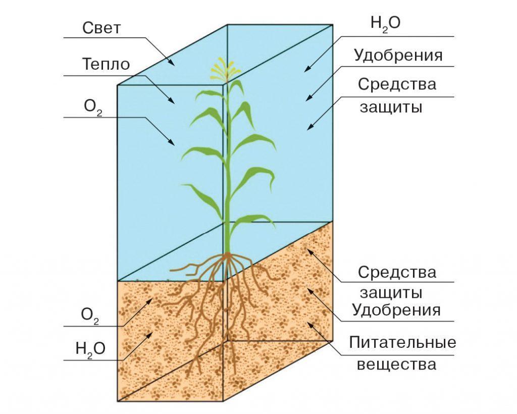 Среда обитания и компоненты, необходимые для жизни растения фото