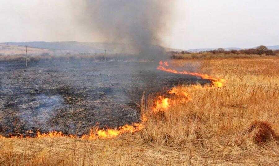Спалювання стерні пшениці