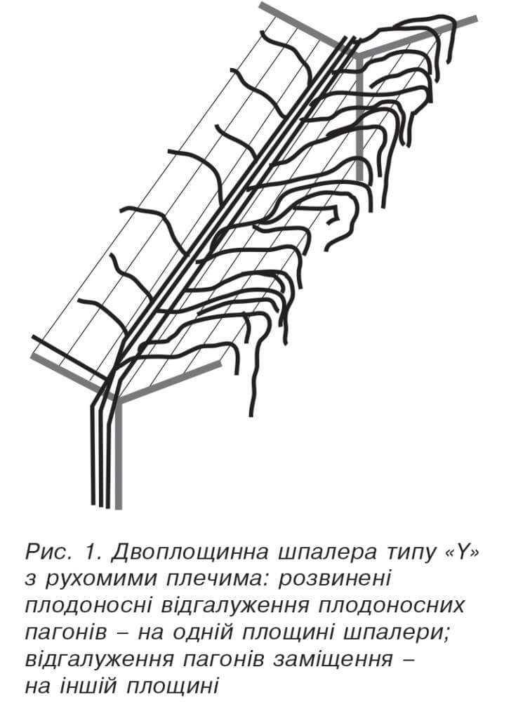 Двоплощинна шпалера типу«Y» з рухомими плечима