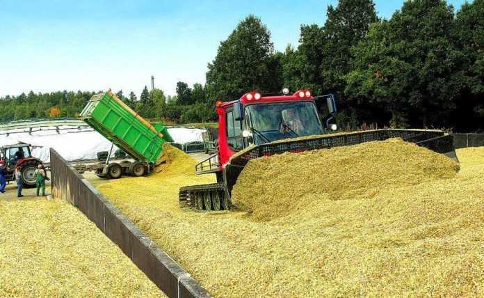 Збирання кукурудзи на силос