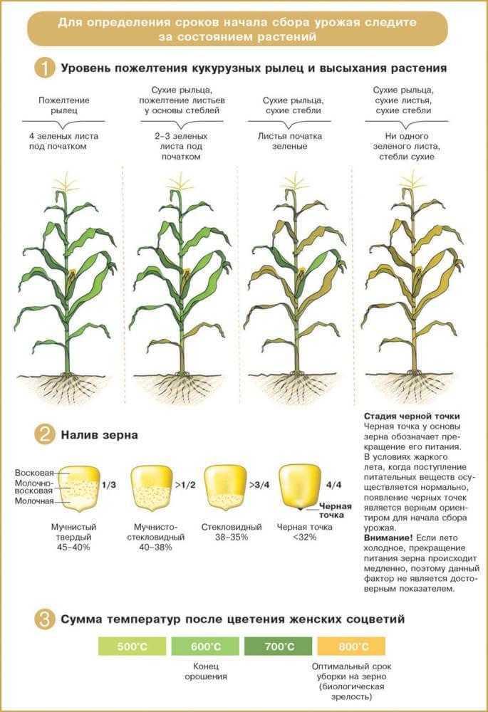 Определение сроков начала сбора урожая
