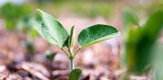 Захист насіння сої