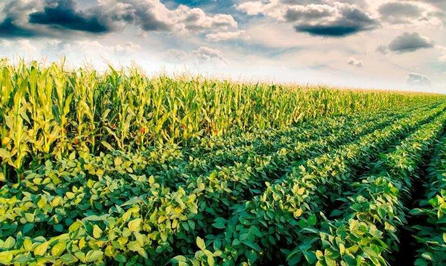 Севооборот в сельском хозяйстве