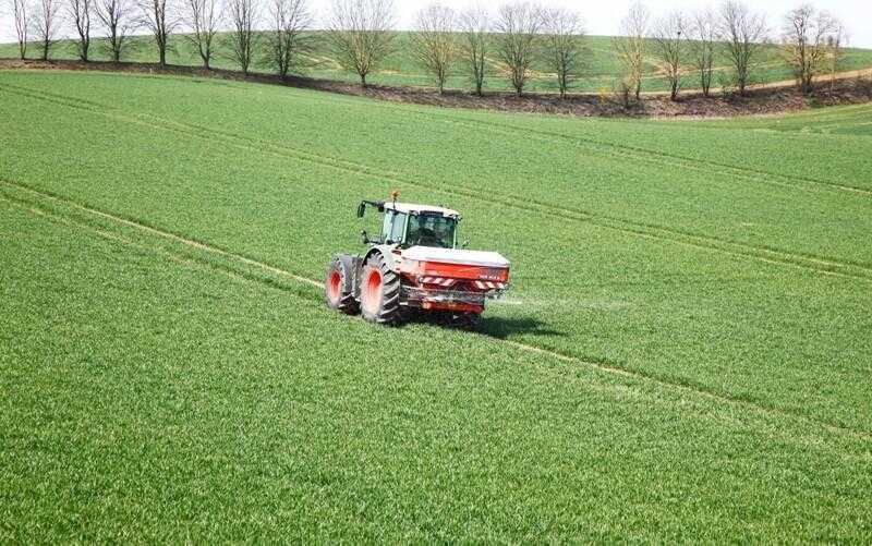 Підживлення пшениці