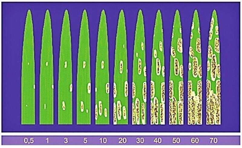 Шкала для визначення ступеня ураження хворобами листової поверхні, %