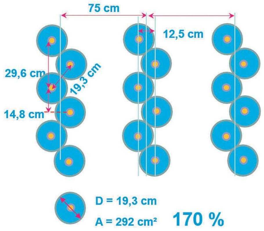 AZURIT 9 Схема розміщення насіння