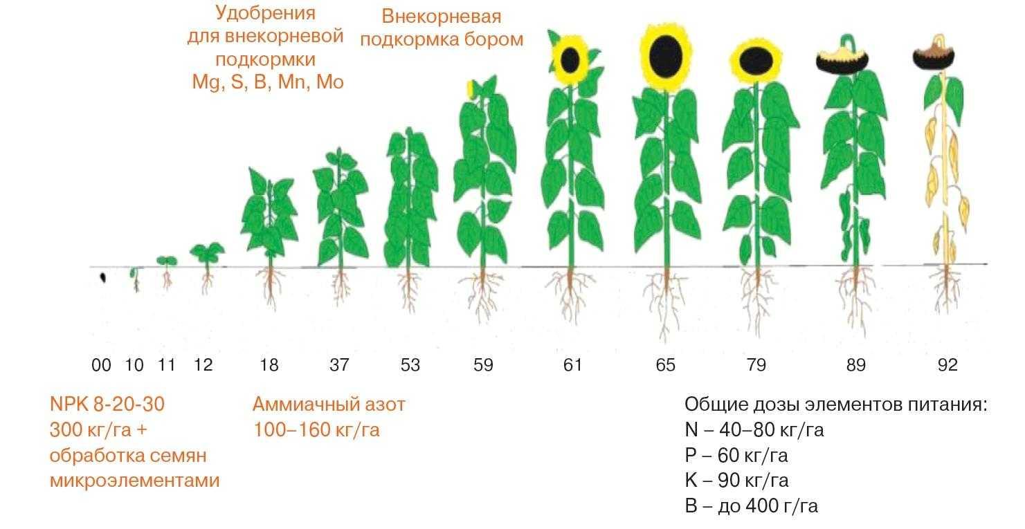 Система удобрения подсолнечника в Венгрии