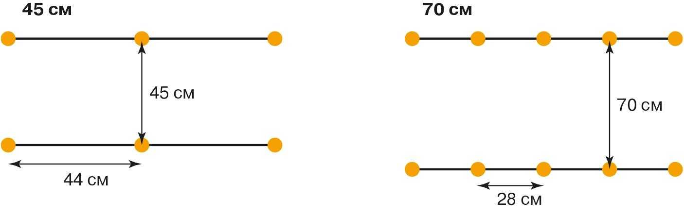 Площа живлення гібридів соняшнику за умови застосування різної ширини міжрядь