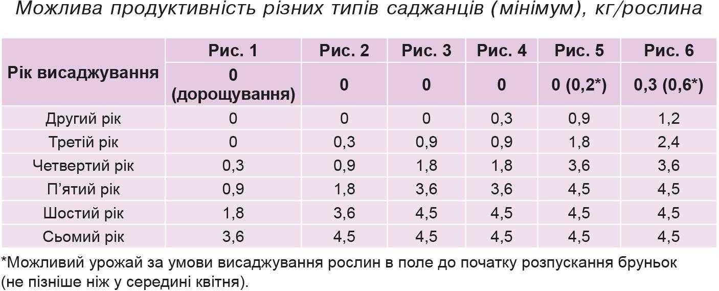 Можлива продуктивність різних типів саджанців (мінімум),