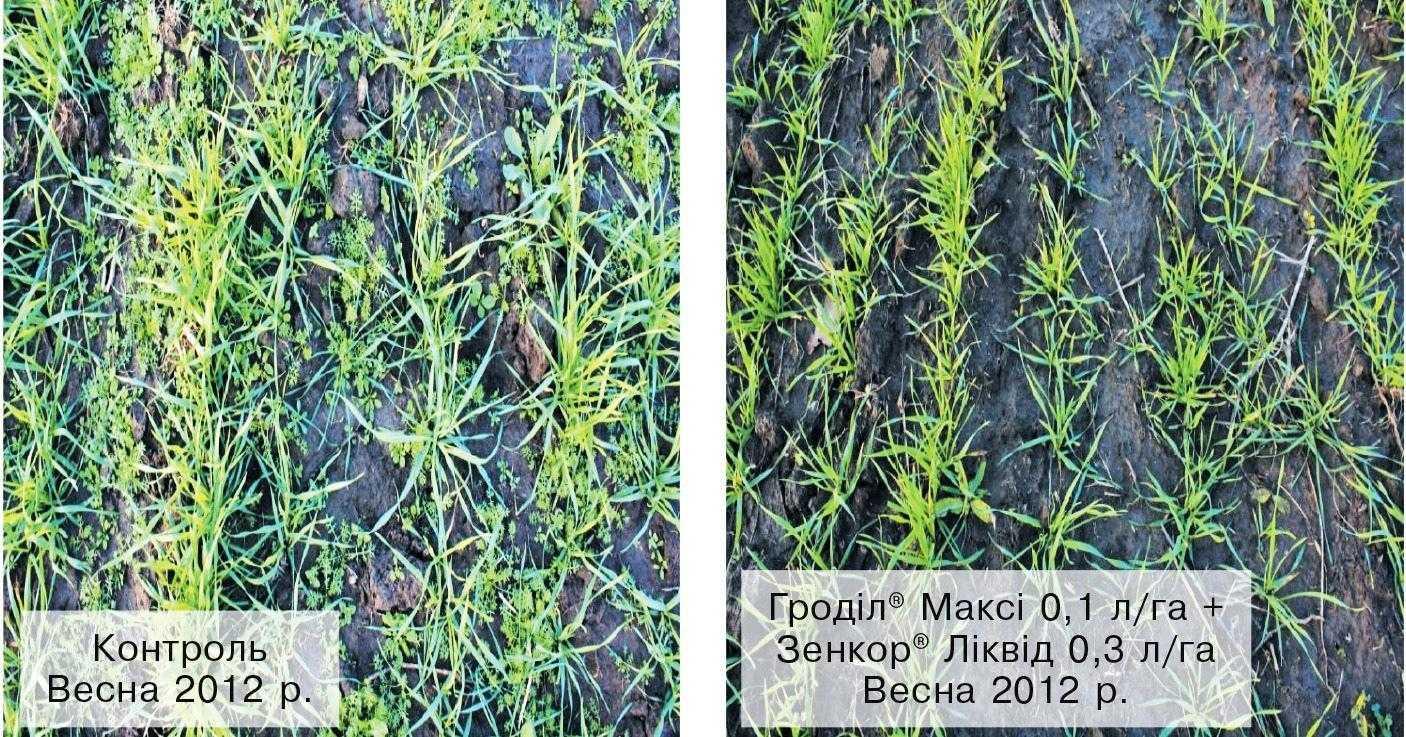 Ефективність осіннього використання гербіцидів на озимій пшениці (с. Кам'янки, Тернопільська область, 2012 р.)