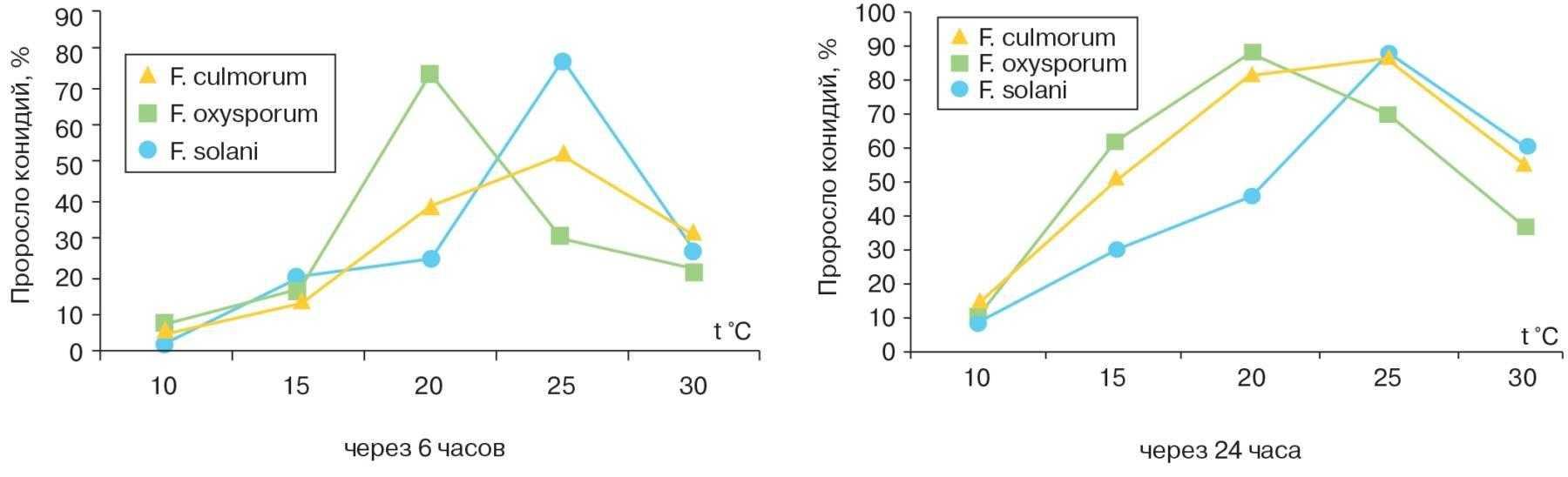 Влияние температуры на прорастание конидий, возбудителей фузариозной гнили сахарной свеклы