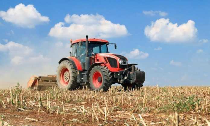 Мульчування кукурудзи