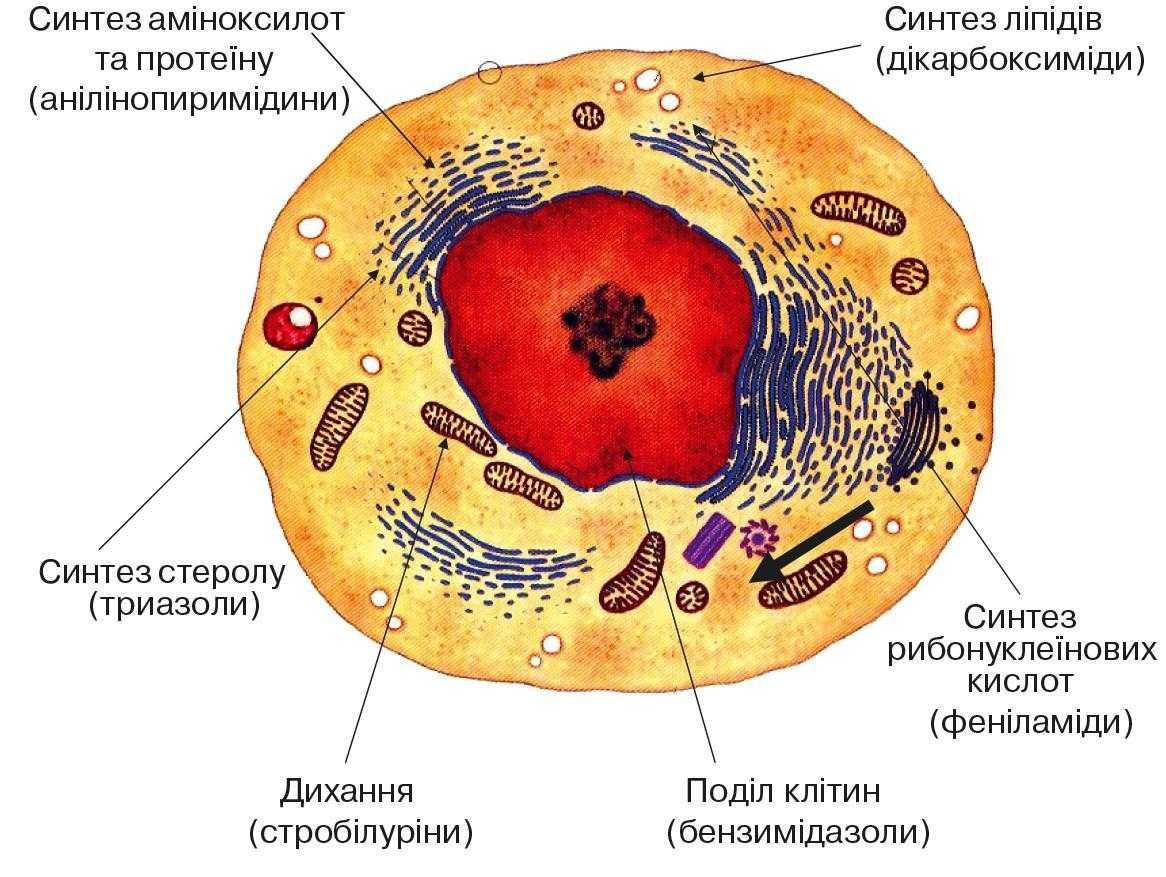 Одноділянкова дія фунгіцидів на патоген