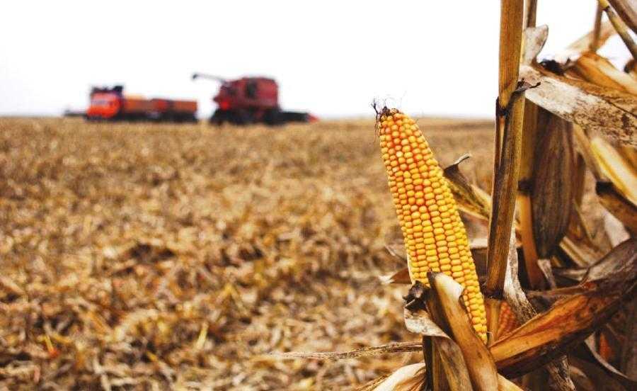 Уборка кукурузы 1