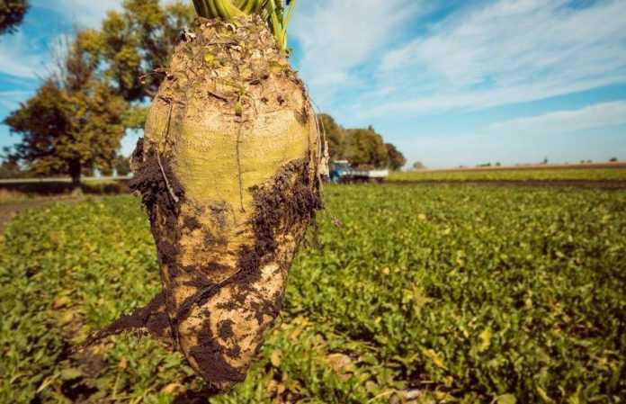 цукрові буряки демо ALFA Smart Agro