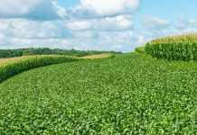 Комплексная борьба с сорняками