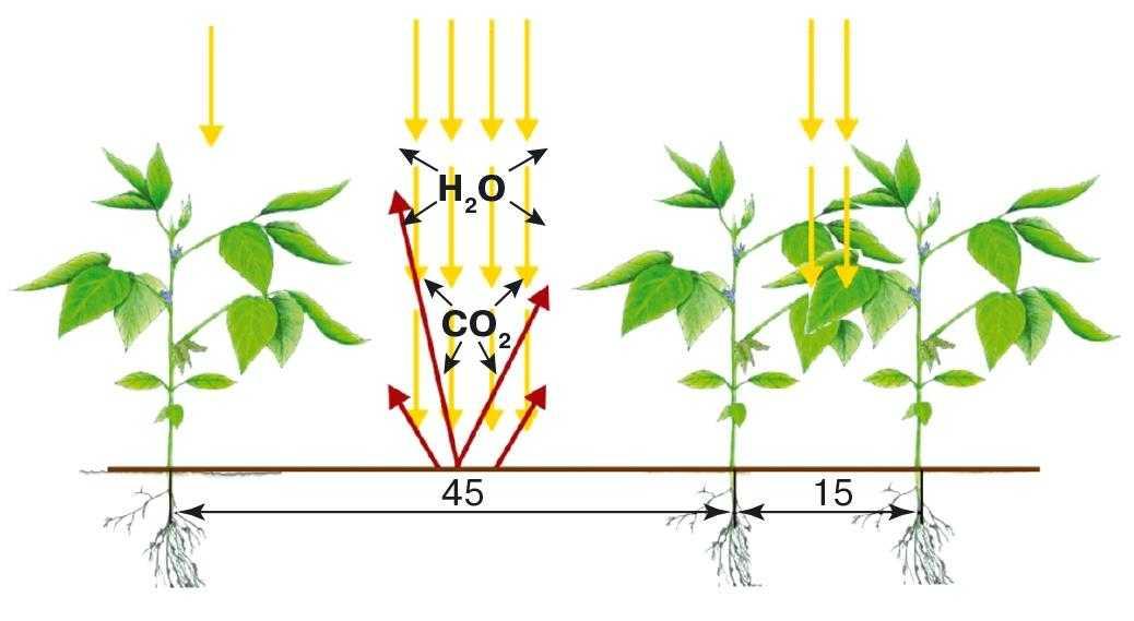Рис. 1. Схема теплообмена между почвой и соей при междурядьях 45 и 15 см