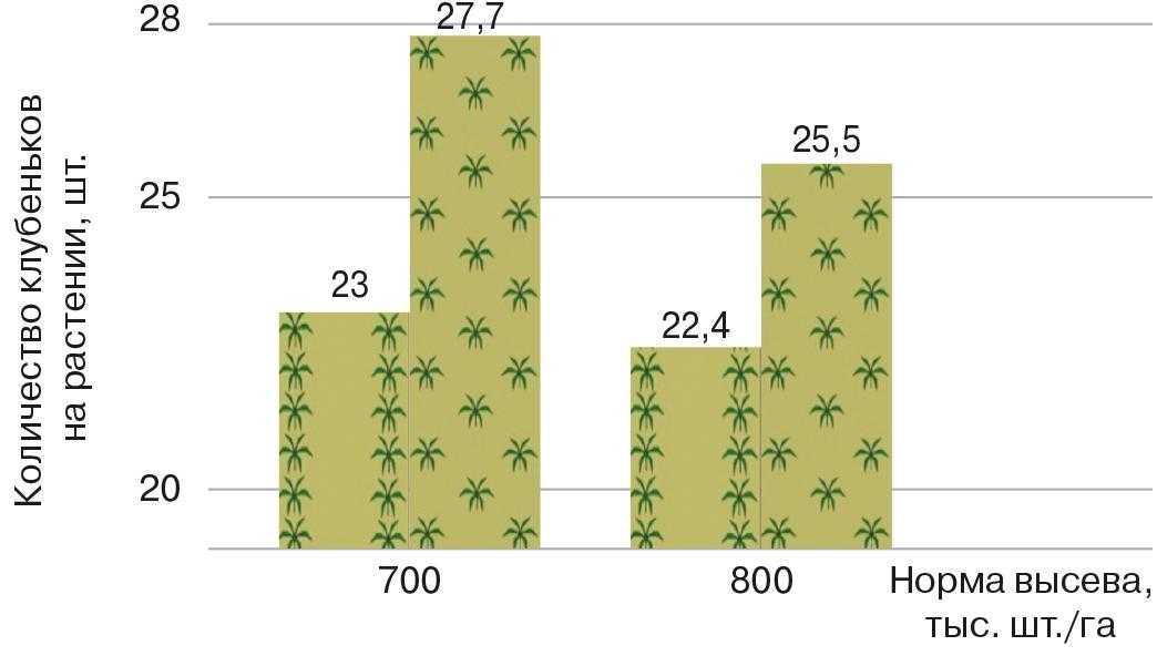 Рис. 2. Влияние распределения растений на поле на формирование «клубеньков» азотпреобразующих микроорганизмов (средние значения по наблюдениям в течение трех лет на сортах Мрия, Романтика, Скеля)