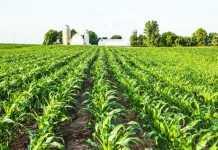 Захист кукурудзи