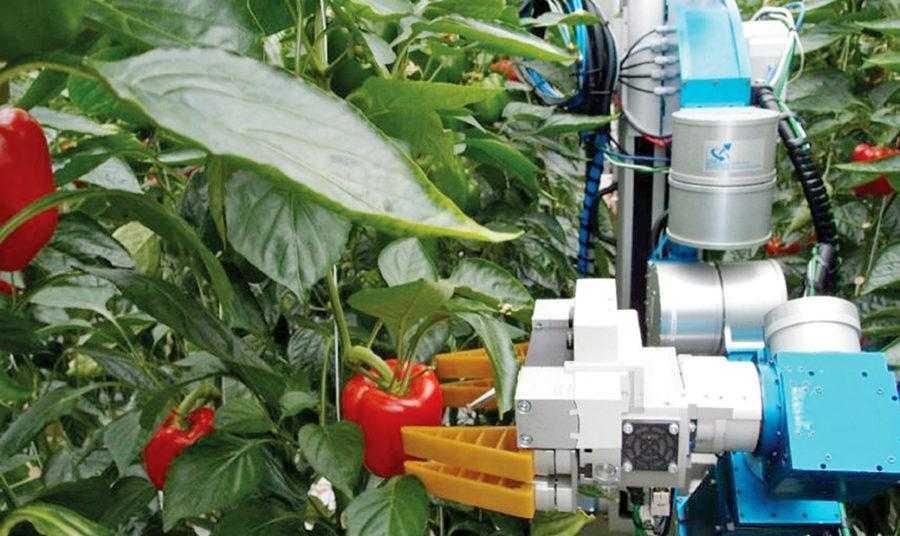 Робот для збирання перцю