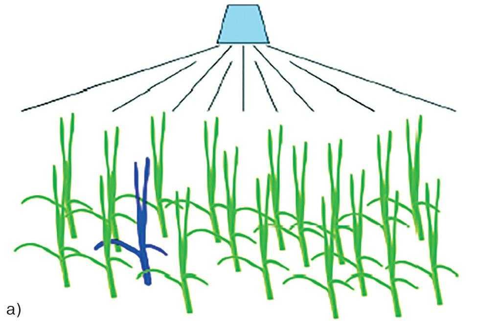 Рис. 1-а. Поява стійких рослин у перший рік обробки а) обробка; б) після обробки