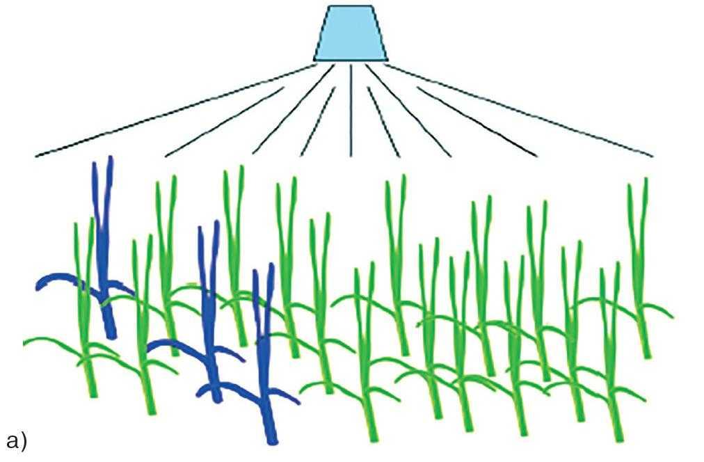 Рис. 2-а. Поява стійких рослин а) другий рік обробки; б) через 5–6 років