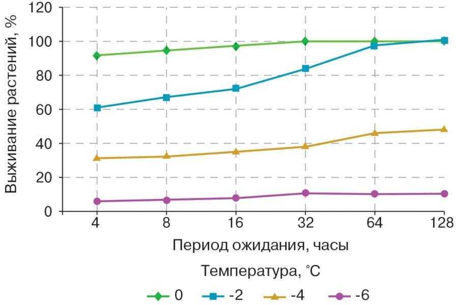 Рис. Влияние периода ожидания перед опрыскиванием гербицидами на выживание растений сахарной свеклы