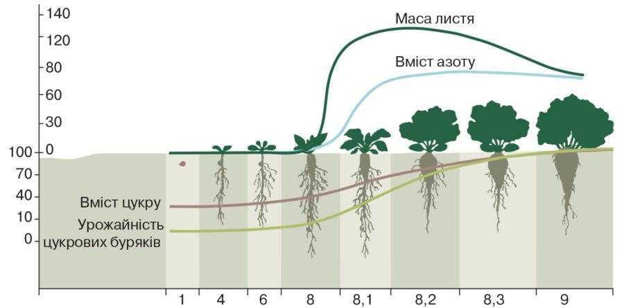 Рис. 2. Процес поглинання азоту та зростання ваги гички, коренеплоду і вмісту цукру