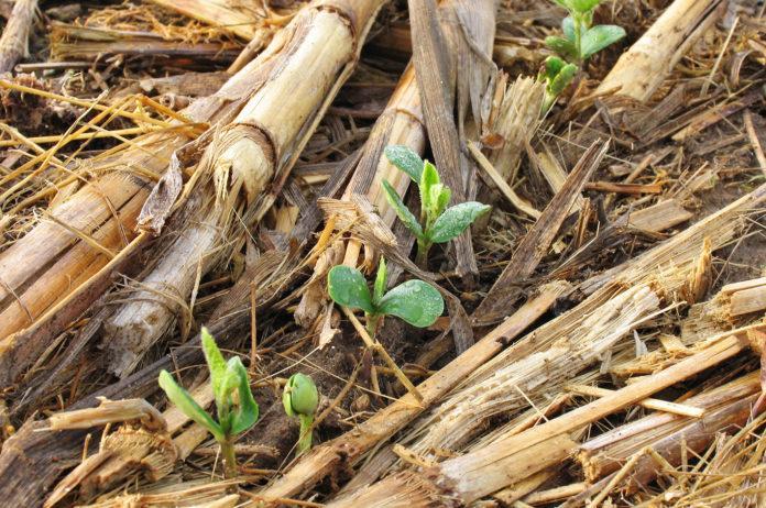 Значение процесса симбиотической азотфиксации в земледелии Украины