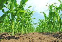 Стреси культурних рослин – потенційні резерви продуктивності