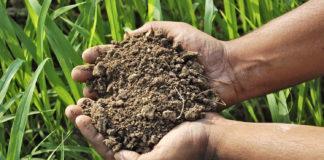 Підвищення ґрунтової родючості чорноземів степу
