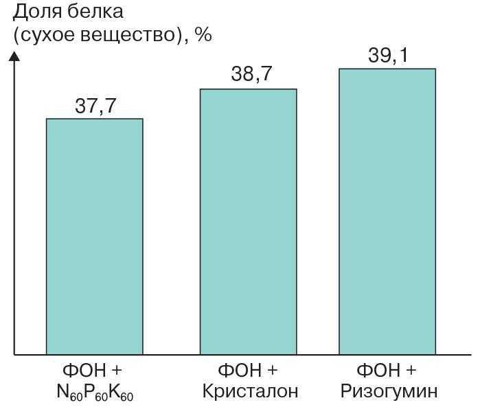 Рис. 11. Изменение доли белка в семенах сои при удобрении Фон + Кристалон и Фон + Ризогумин