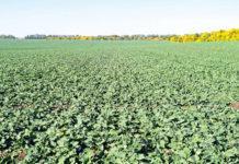 Внесення добрив під зернові та ріпак