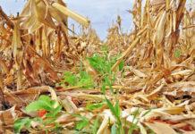 Выбор оптимальных покровных культур для вашей фермы