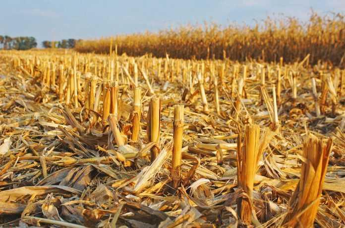 Использование кукурузной соломы для энергетических целей