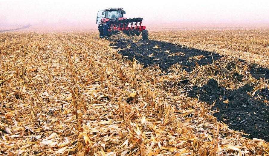Рис. 1. После кукурузы в поле остается очень большое количество растительных остатков, с которыми даже хороший плуг не всегда может справиться. Обычно они представляют проблему при основной обработке, поскольку качественно заделать в почву большое количество растительных остатков довольно затруднительно, особенно при урожайности кукурузы свыше 9 т/га. В таком случае на поле остается в среднем 12–18 т/га кукурузной соломы, т. е. поле размером 100 га обычно дает 1200–1800 т кукурузной соломы